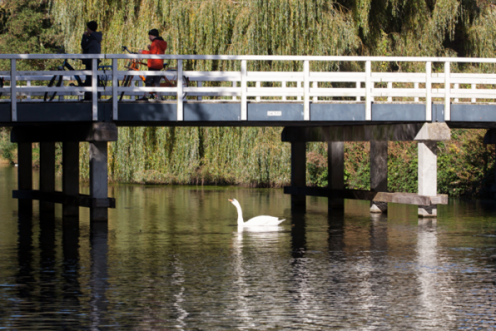 Two people standing on a bridge above water with a swan