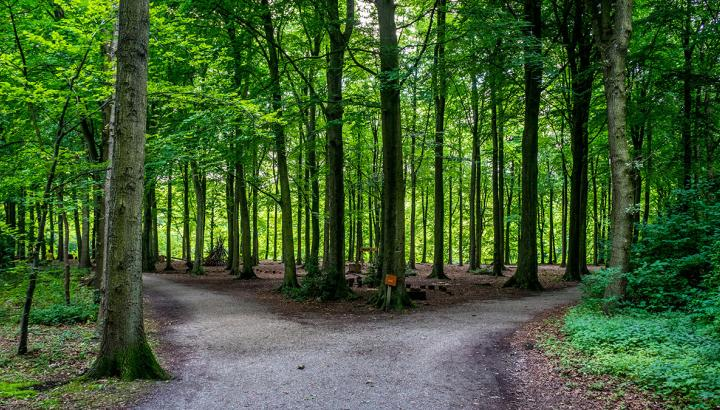 A forest of trees in Haagse Bos